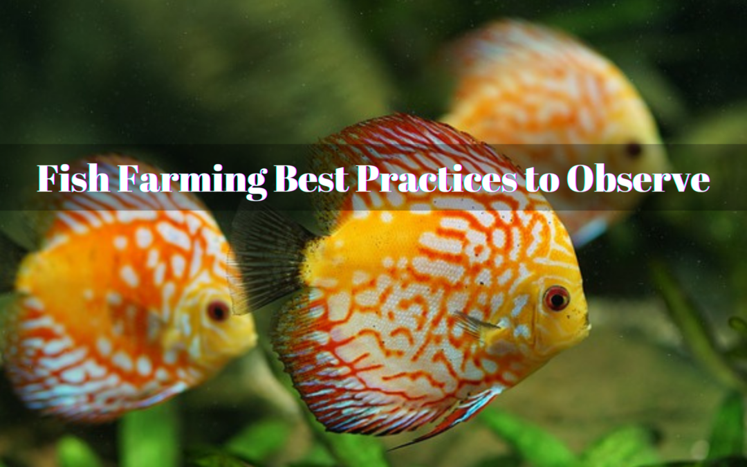 Fish Farming Best Practices to Observe