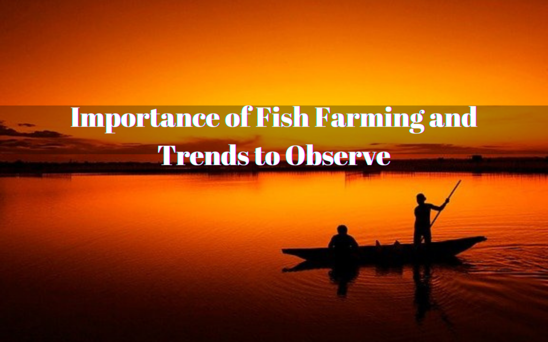 Importance of Fish Farming and Trends to Observe