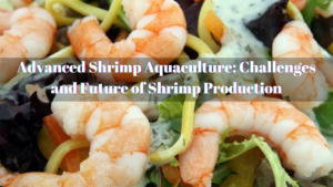 shrimp aquaculture