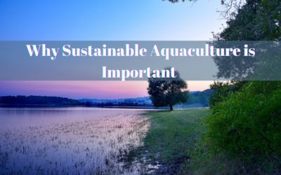 Why Sustainable Aquaculture is Important