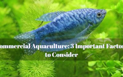 Commercial Aquaculture: 3 Important Factors to Consider